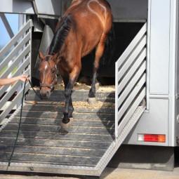 Tapis pour pont de camion et van pour chevaux, 2 dimensions disponibles - EKEEP