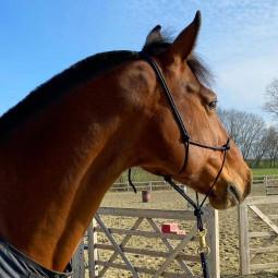 Licol d'équitation éthologique  - EKEEP